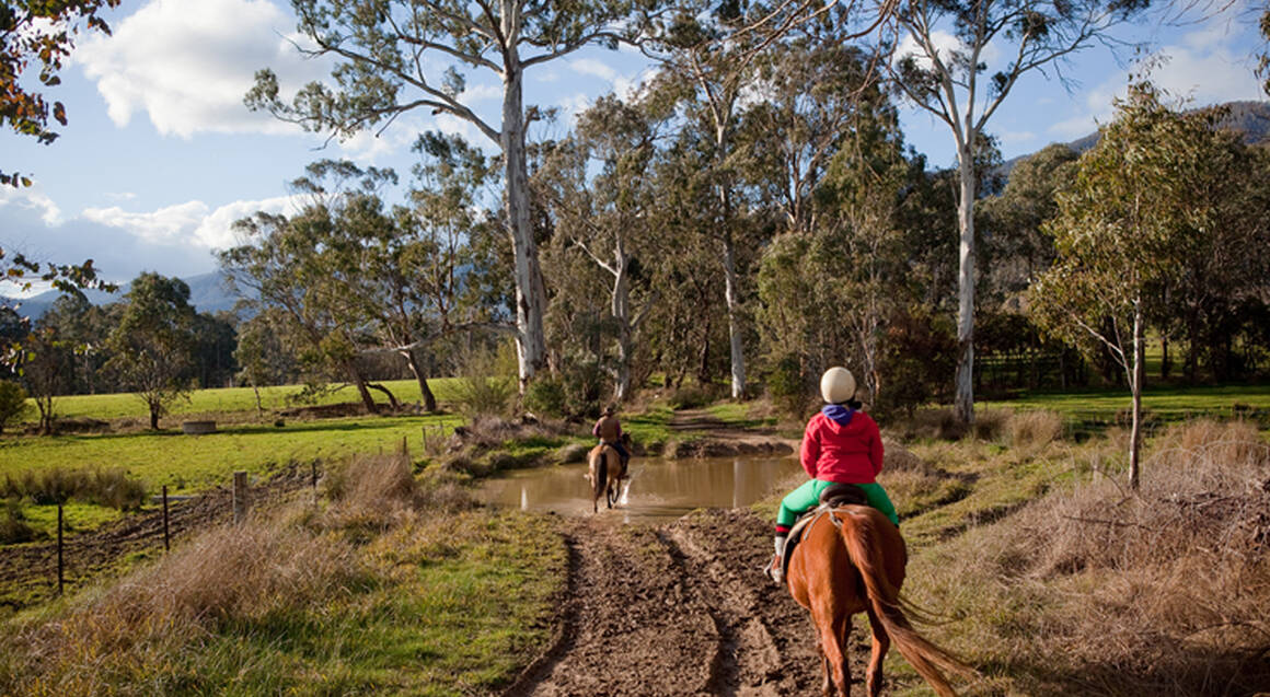 Alpine National Park Horseriding Trail - 2 Hours