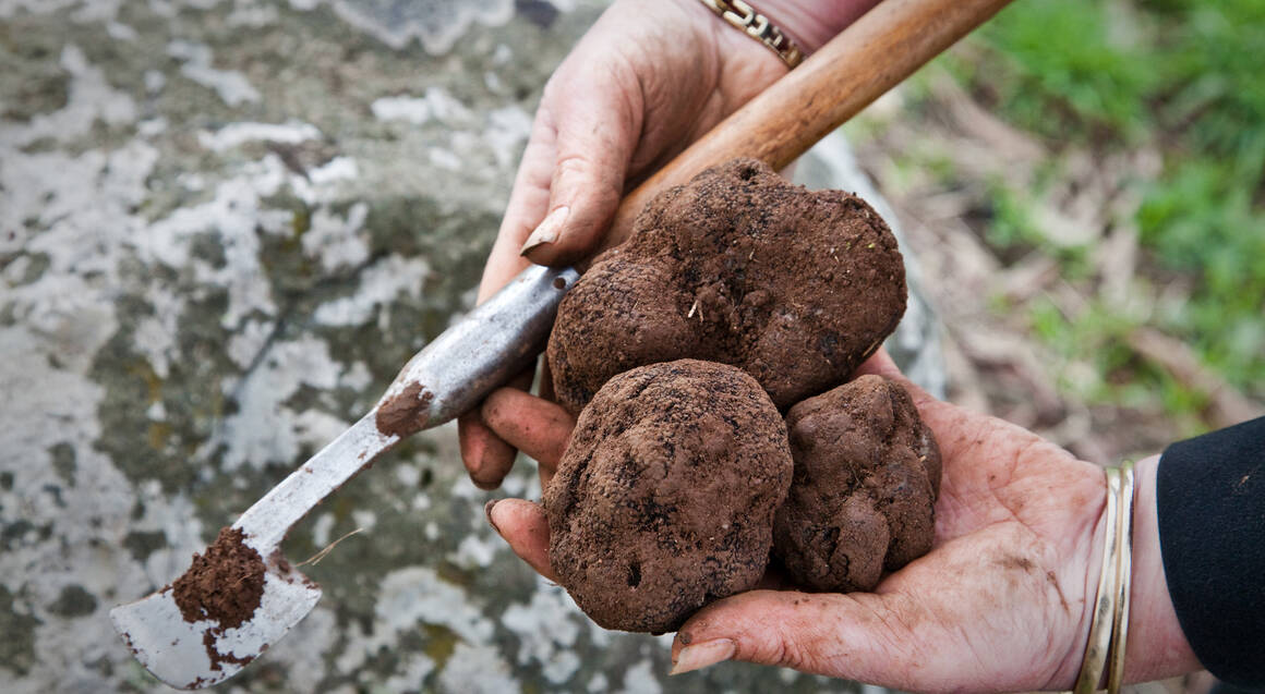 Truffle Hunt with Regional Tasting Platter and Bubbles