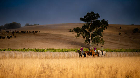 Barossa Valley Horse Riding Tour - 90 Minutes