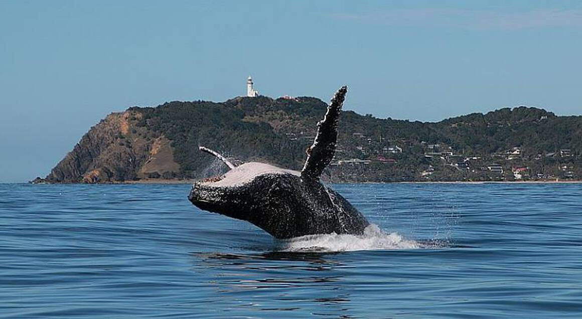 Byron Bay Whale Watching Tour with Transfers