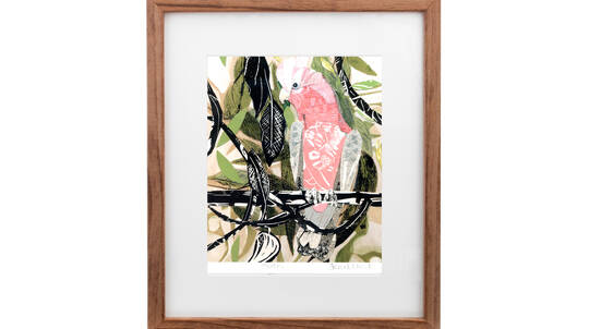 Framed Art Print - Galah Bird