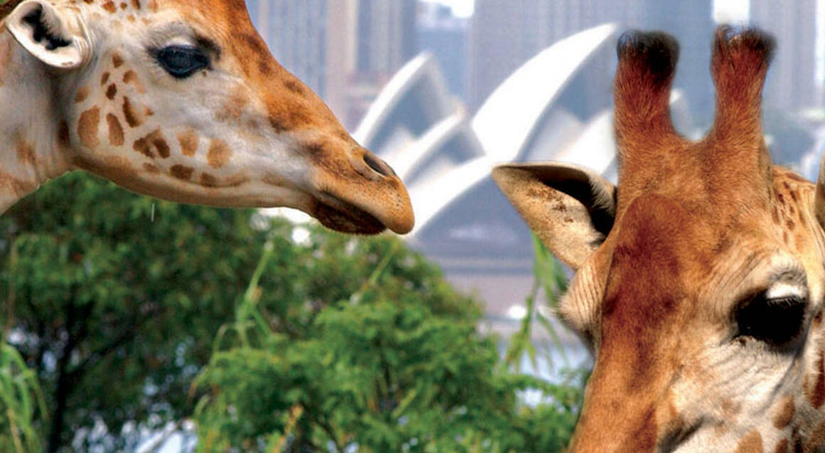 Sydney Harbour Cruise with Taronga Zoo Entry - Adult