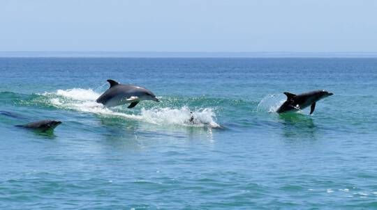 Dolphin Discovery Eco Cruise - 90 Minutes