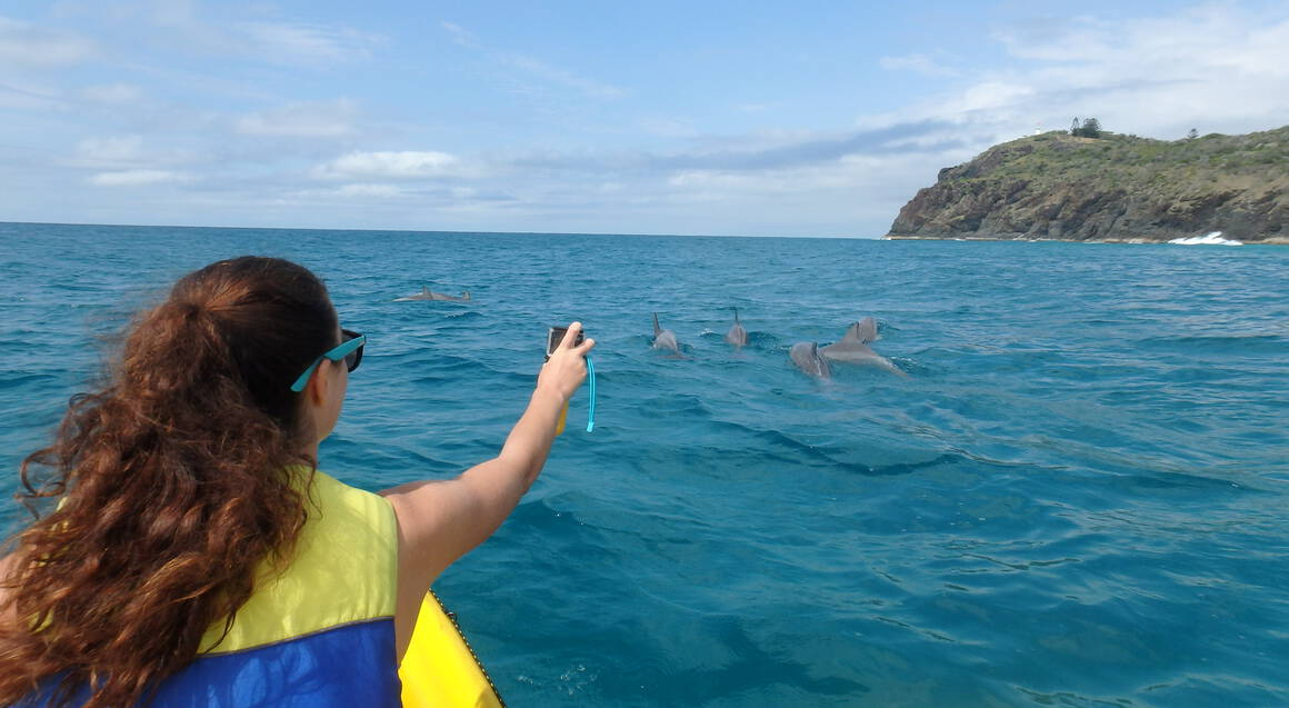 Dolphin Spotting Kayak and 4WD Adventure Day Tour - Noosa