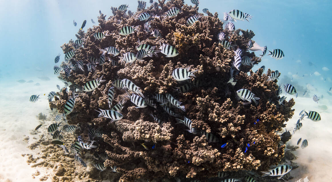 tropical fish swimming in coral