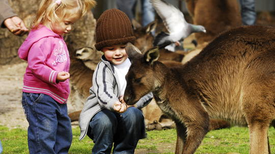 Sovereign Hill Tour with VIP Wildlife Encounter - Child