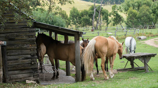 Horse Riding Getaway Adventure - 2 Nights