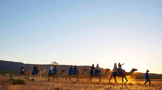 Outback Afternoon Camel Ride - Adult
