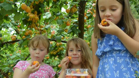 Orchard Farm Tractor Tour with Tastings and 1kg Fruit Box