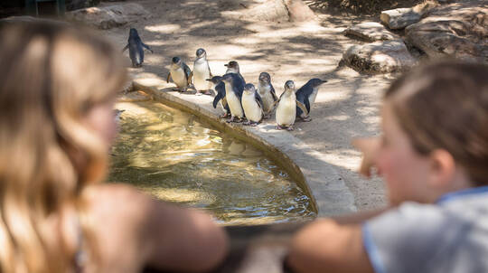 Adelaide Zoo General Admission Entry
