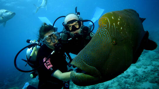 Cruise and Scuba Diving at the Great Barrier Reef