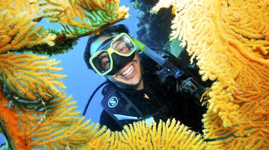 Great Barrier Reef Certified Diving with Lunch - Full Day