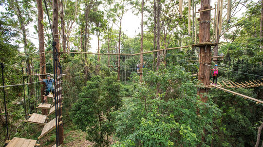 High Ropes and Flying Fox Adventure - Sunshine Coast