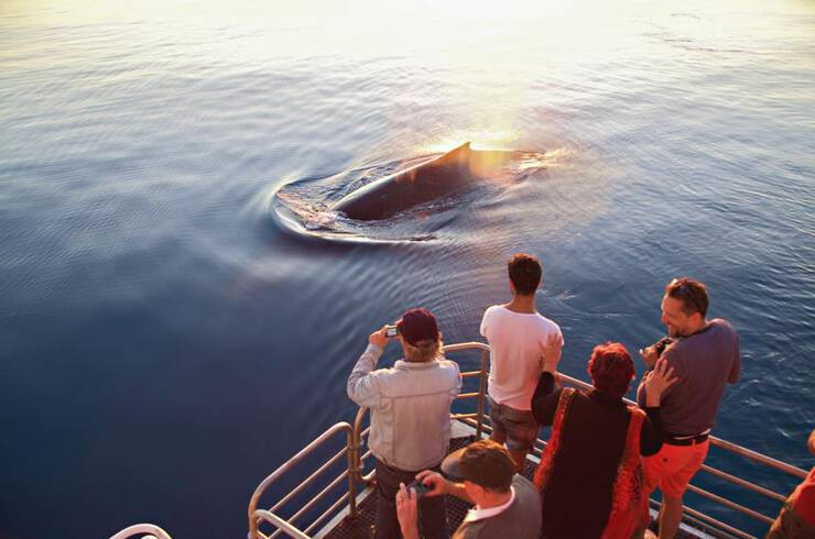 People watching a whale from a boat