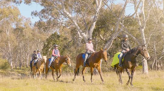 Woodlands Historic Park Horse Riding Tour - 60 Minutes