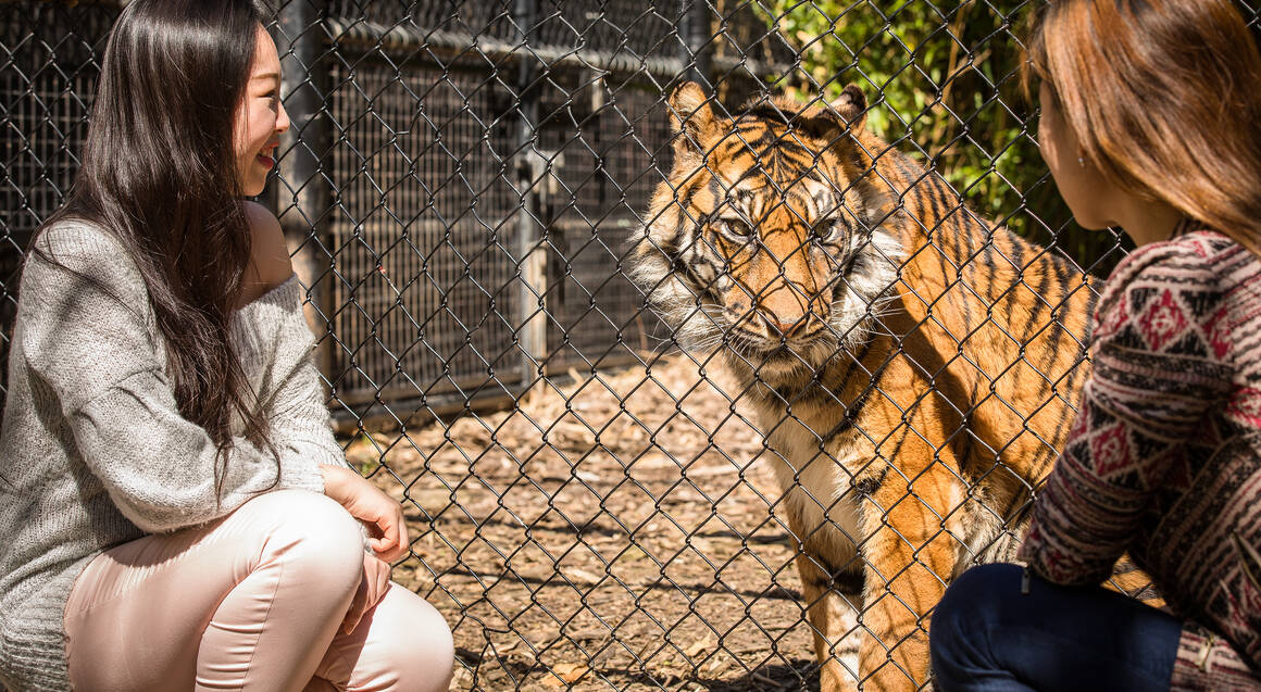 Keeper for a Day at Adelaide Zoo
