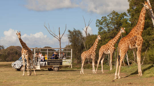 Off Road Animal Safari at Werribee Open Range Zoo - For 2
