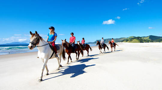 Beach Horse Riding and Wine Tasting Day Tour with Lunch