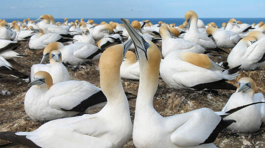 Muriwai Beach and Gannet Colony Eco Tour with Winery Lunch