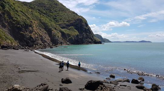 Auckland Black Sand Adventure Day Trip