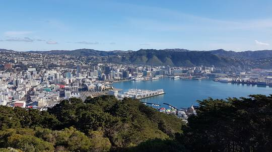 Wellington Guided Half Day Tour