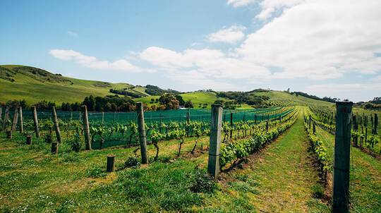 Wine on Waiheke Tour with Ferry