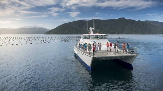 Marlborough Wine Tour and Cruise