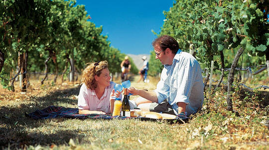 Self Guided Cycling Winery Tour in the Hawke's Bay