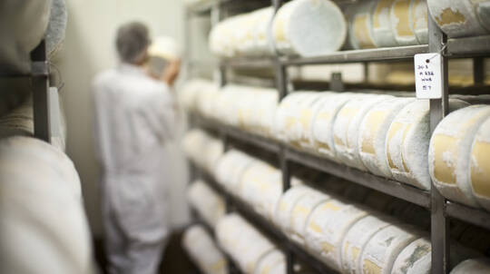 Behind The Scenes Cheese Factory Tour and Tasting